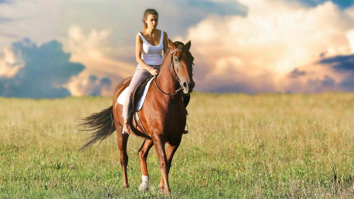 Comment monter la selle du cheval ?