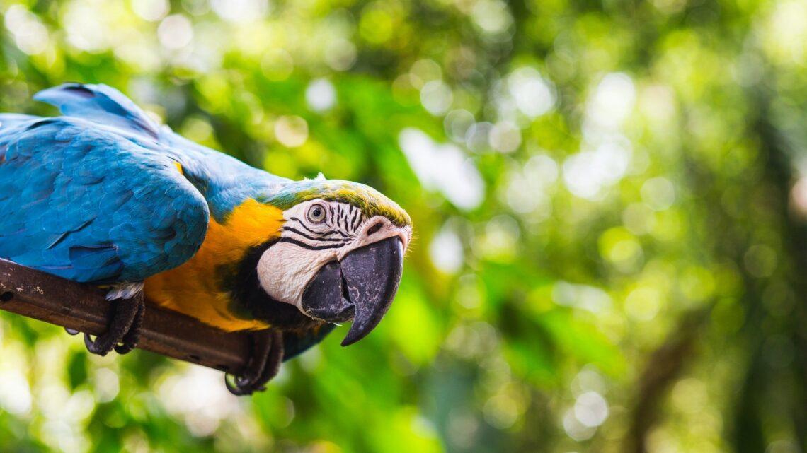 Comment choisir une assurance pour perroquet ?